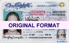 Free Florida Drivers License Template Download